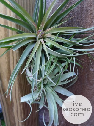 liveseasoned_summer2014_showerplants9