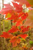 liveseasoned_fall14_fallphotography-1-6