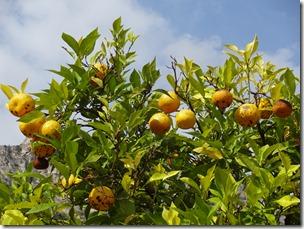 lake garda limone 4