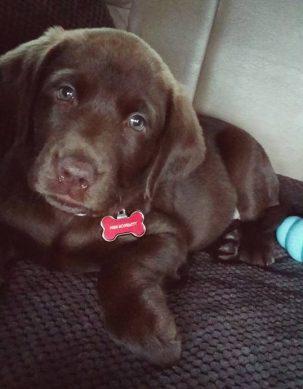 Our new puppy, Scarlett.