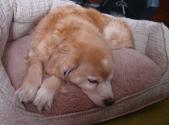 leahsdogbuffy