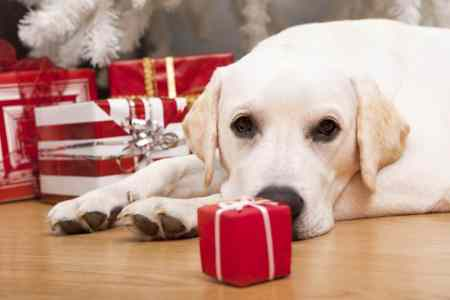 Free, cheap and homemade gifts for pets