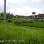 Walk In Ubud Rice Patty