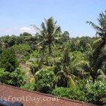 Walk In Ubud Rice Terrace