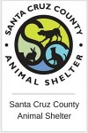 charity - animal shelter