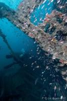 Wreck of the Thai Muang