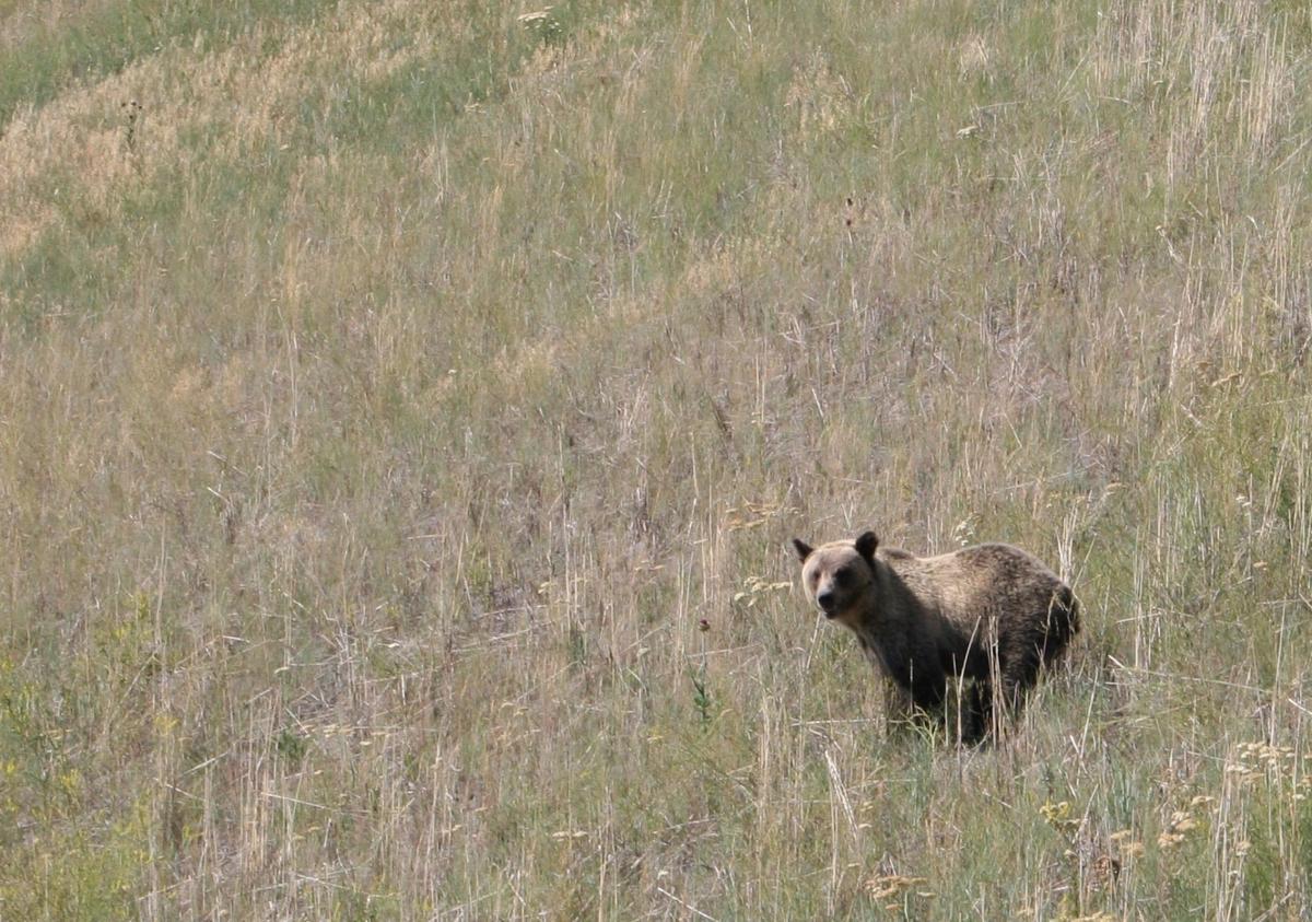 Fullsize Of What Does Bear Poop Look Like