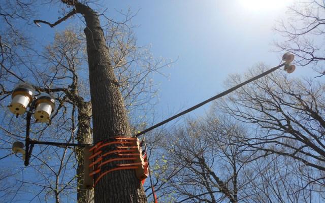forest sensors
