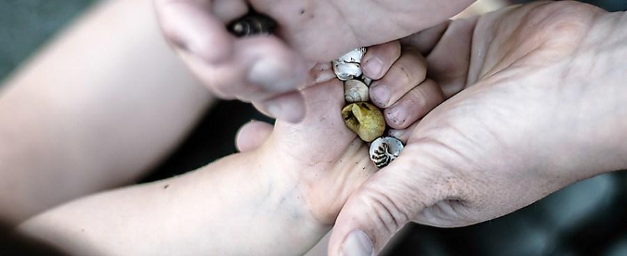 L'Oeil de Paco - Photographies de Jean-François Le Bescond - Famille - Echange de coquillages