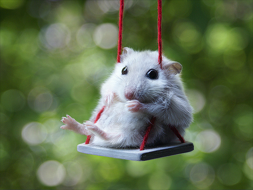 Even Cute Mice Like To Swing