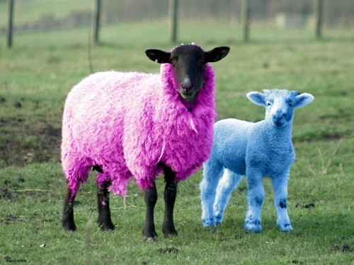 She's the smokin' hot pink sheep in the family.