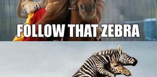 Wild Animal Races