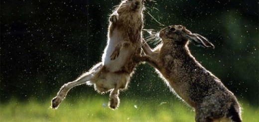 Every bunny was kung fu fighting.
