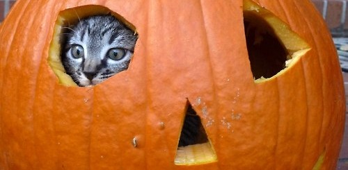 Halloween Pumpkin Cat