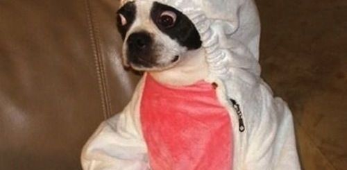 Dog Bunny Costume