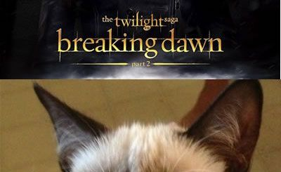 Grumpy Twilight