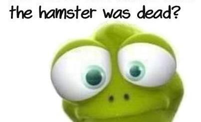 Dead Hampster