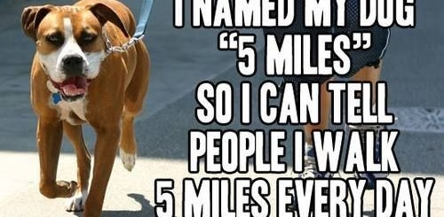 5 Miles Dog