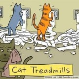 cat treadmill