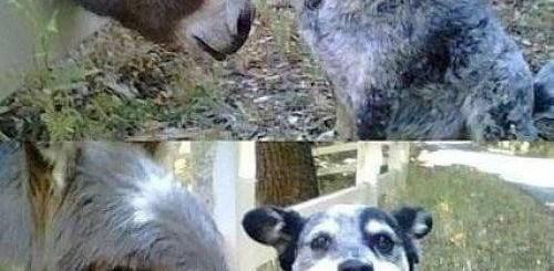 dog taste donkey