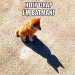 batman dog