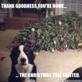 Dog Christmas Tree