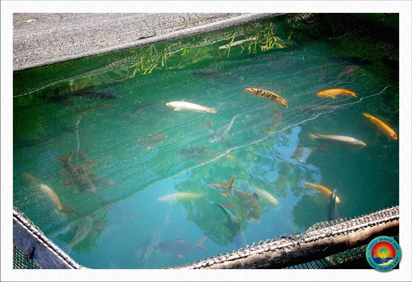 bunte Fische im See