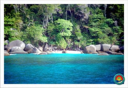 Dschungel auf einer einsamen Insel