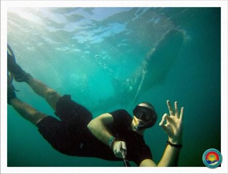 Selfie mit Walhai