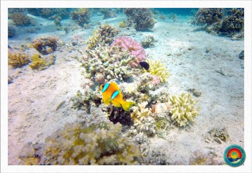 Clean-Up Day - Auch Nemo half mit ;-)