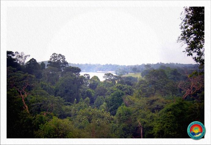 Aussicht über den Regenwald Singapurs