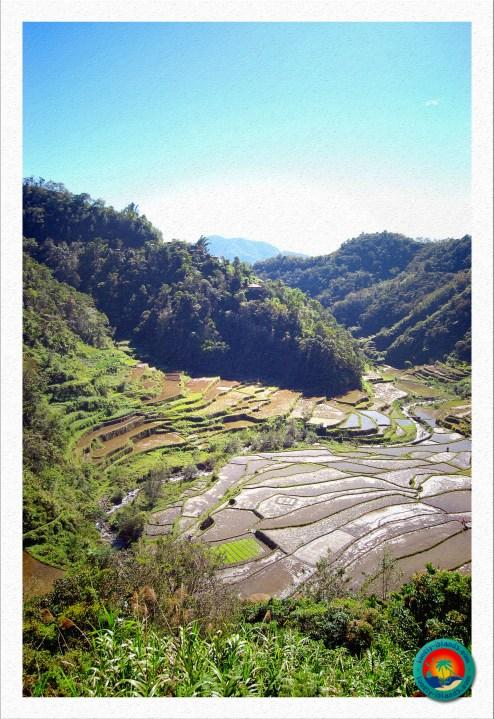 Reisterrassen von Batad