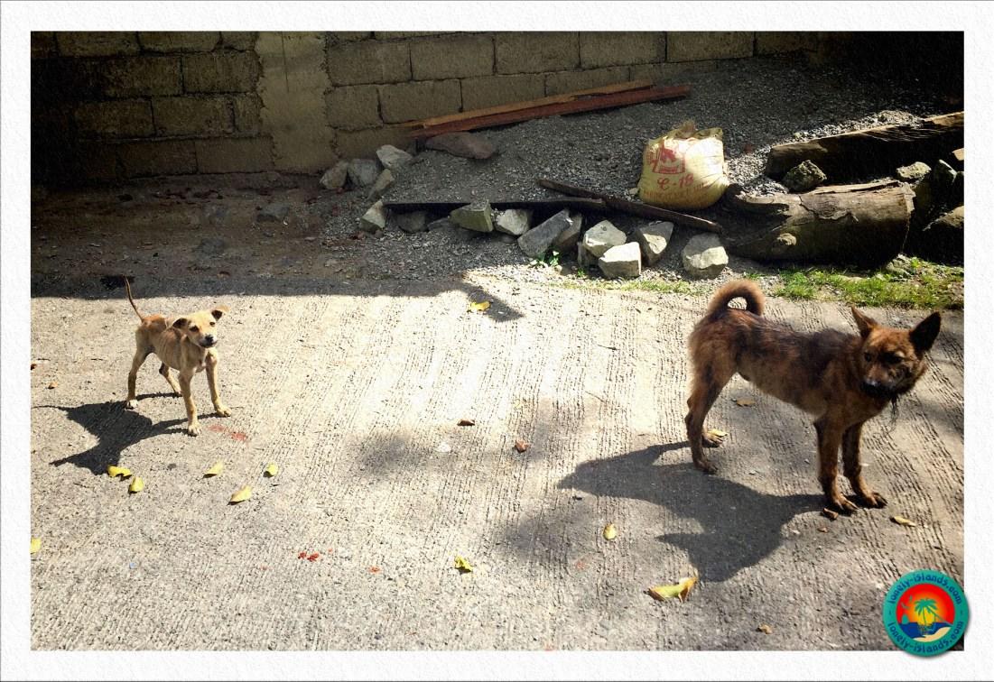 Hunde auf dem Weg zum Viewpoint