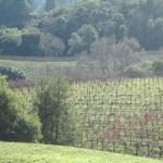 The Armida Winery estate zinfandel vineyard