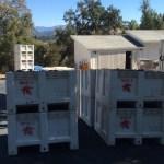 Half-ton bins from Maple Vineyards awaiting sorting