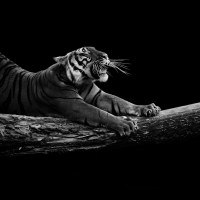 Lukas Holas Snaps Stunning Shots of Animals in Black and White