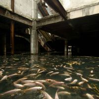 Abandoned Shopping Mall Teeming with Fishes