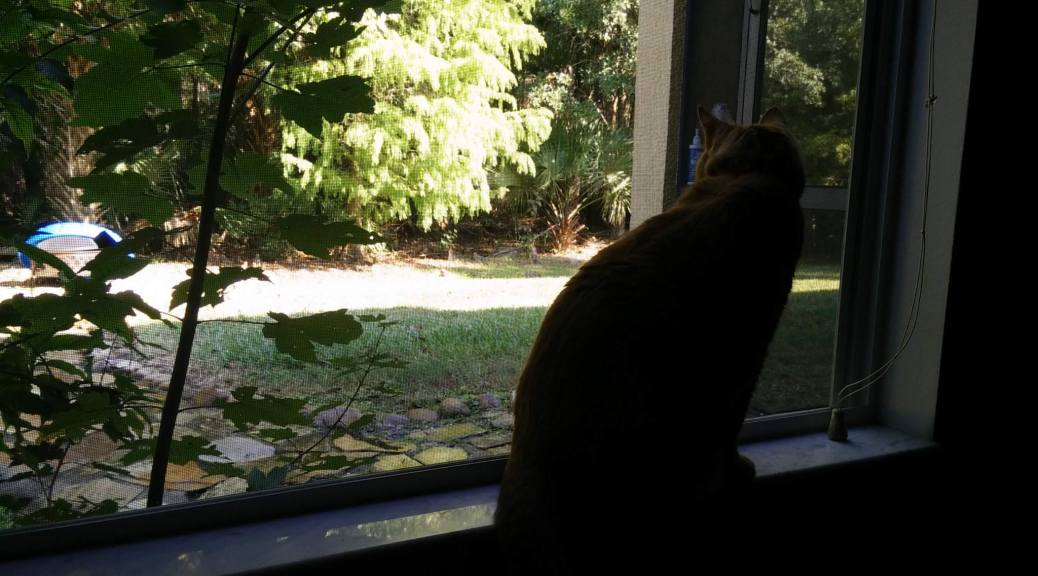 floppy-on-the-window-sill-201511