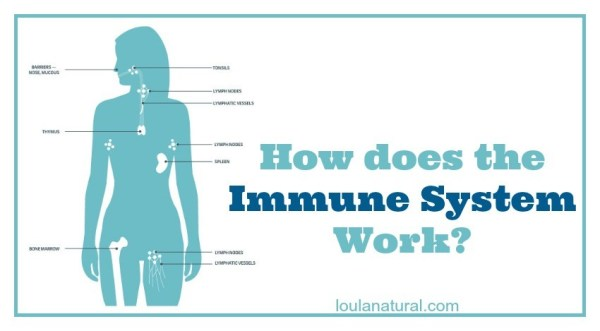 the way the immune system works 6 immune system busters & boosters  work out to blow off steam counseling is a big help, too  lonely freshmen had a weaker immune response to a flu vaccine than those who felt connected .
