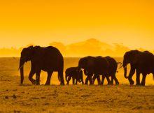 afrika kenija