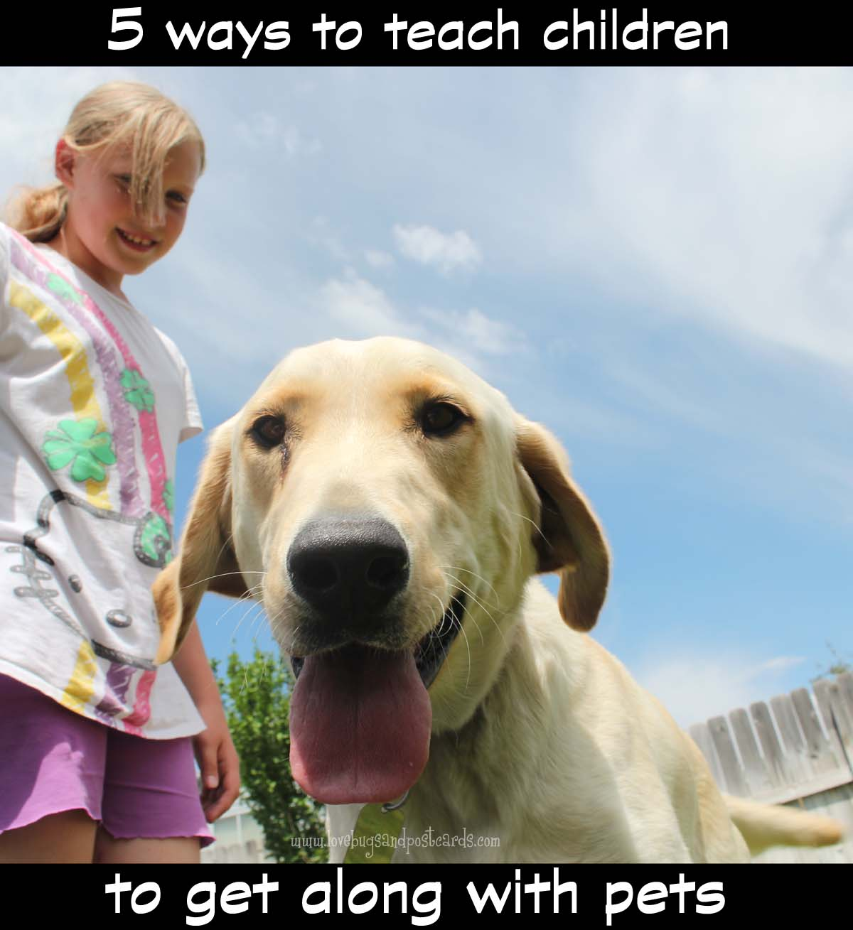 5 ways to teach children to get along with pets