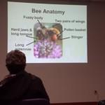 Манитобские пчелы