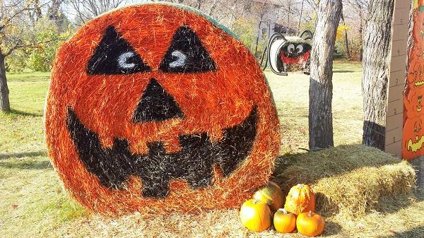 Pumpkin market (2)