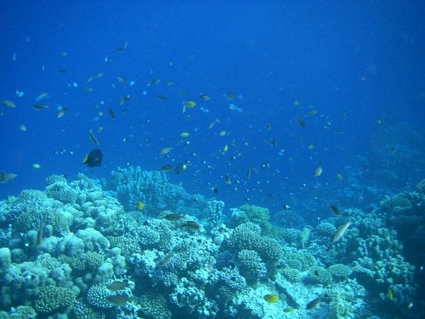 59. подводный мир Красного моря (58)