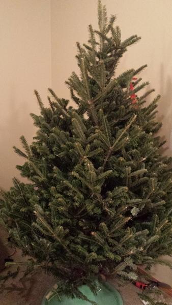 Christmas Tree (5)