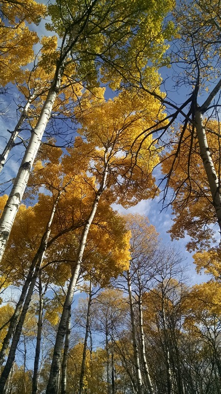 Fall in Riding Mountain (1)