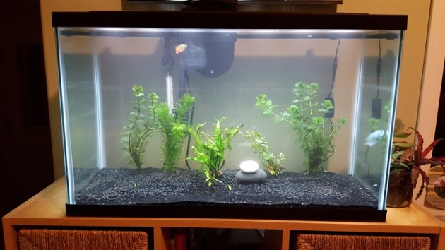 Just started fish tank