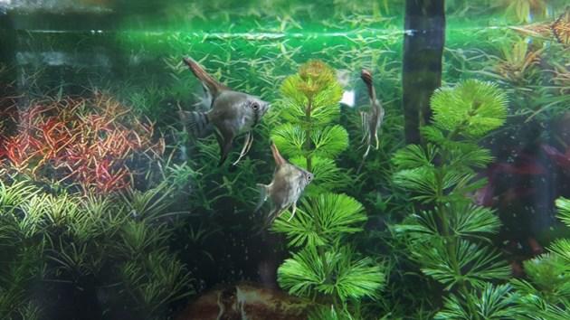 fish tank (7)