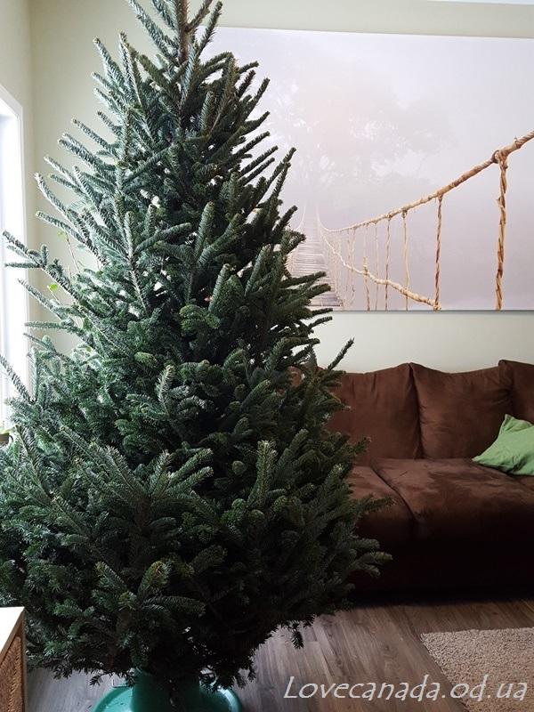 christmas-2016-14