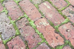 moss grout